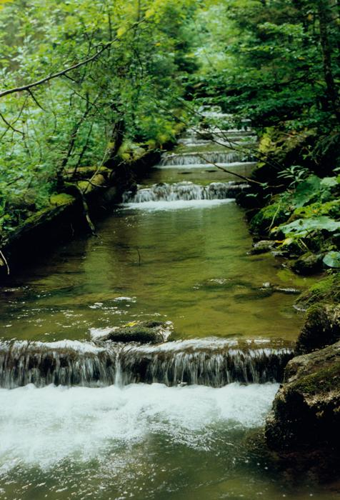 The Taschbach stream in the Freinbach area