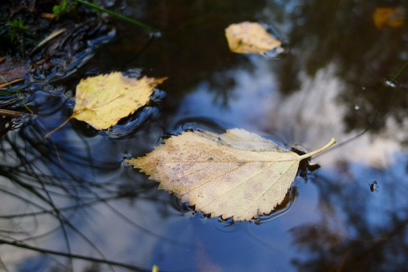 Leaves resting on amber-coloured pond