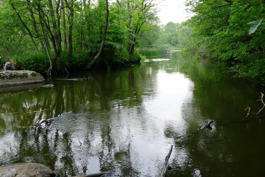 Branch in river Rönne