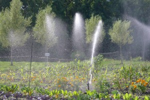 Dancing plumes from irrigation sprinkler